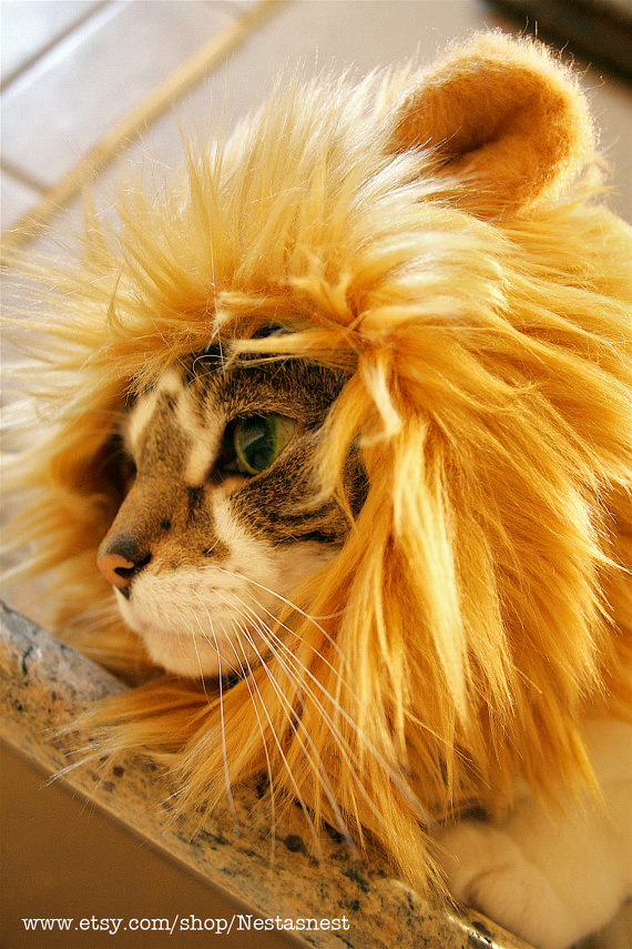 lion-hat-cat