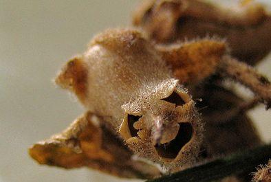 human-skull-flower